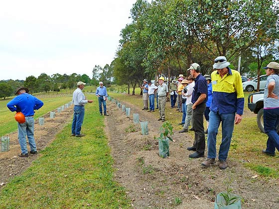 Pic. The group inspects a recently established mixed species native plantation