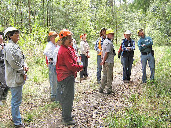 Members reviewing a large iron bark
